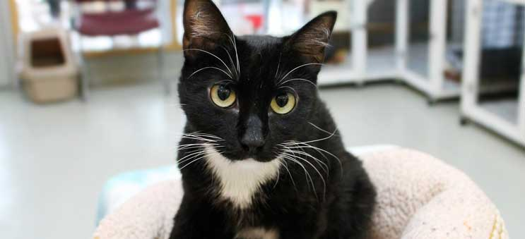 Cat available for adoption through Operation Kindness, a leading no-kill animal shelter in North Texas