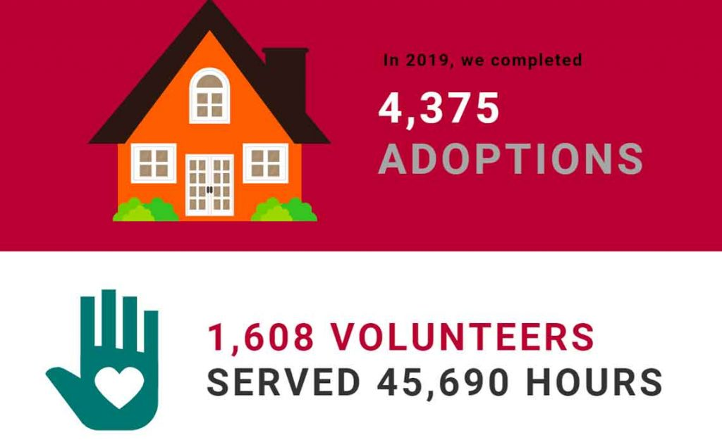 Operation Kindness Blog - 2019 Year in Review | North Texas No-Kill Animal Shelter