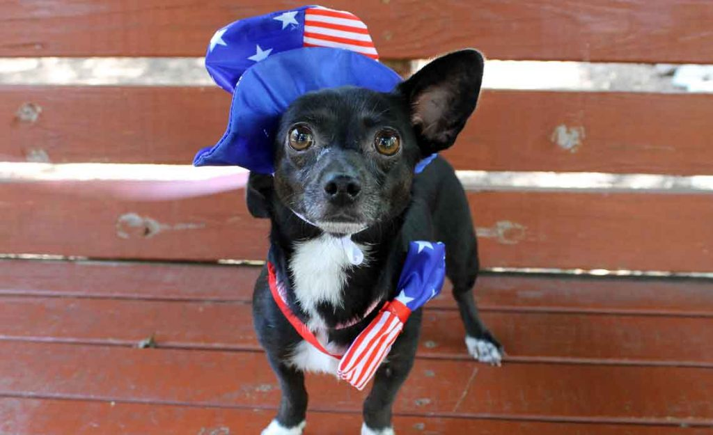 Operation Kindness Blog - 4th of July Pet Safety Tips | North Texas No-Kill Animal Shelter