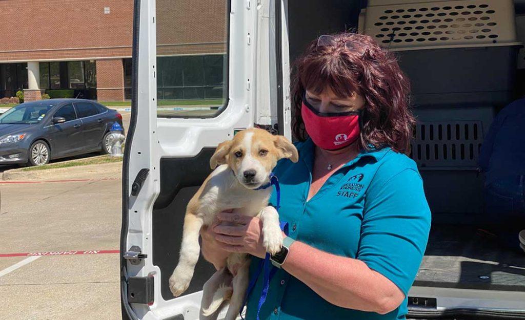 Operation Kindness Blog | Operation Kindness Joins the BISSELL Pet Foundation National Shelter Alliance | Operation Kindness No-kill Animal Shelter