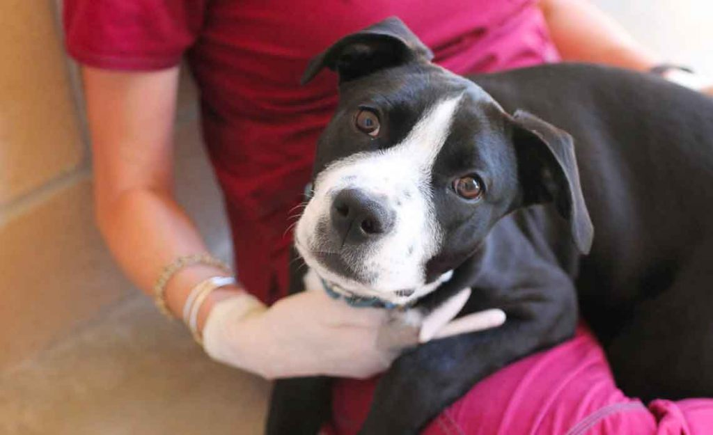 Operation Kindness Blog - COVID-19 update | North Texas No-Kill Animal Shelter