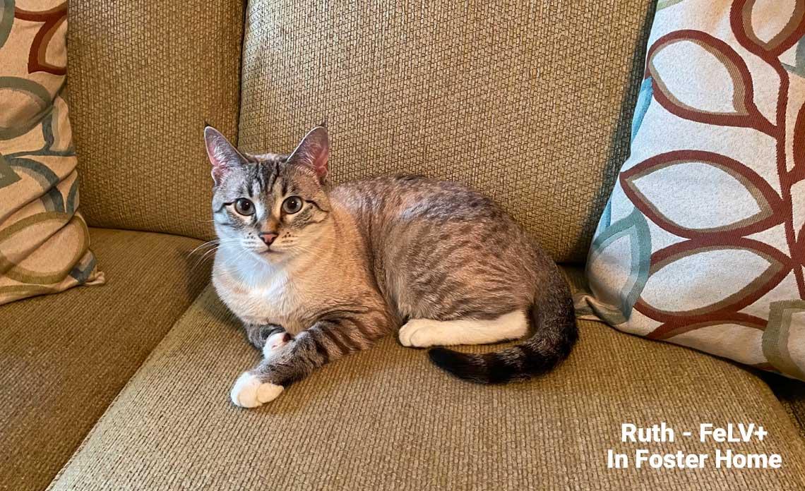 Operation Kindness Blog - New adoption program for FeLV cats   North Texas No-Kill Animal Shelter