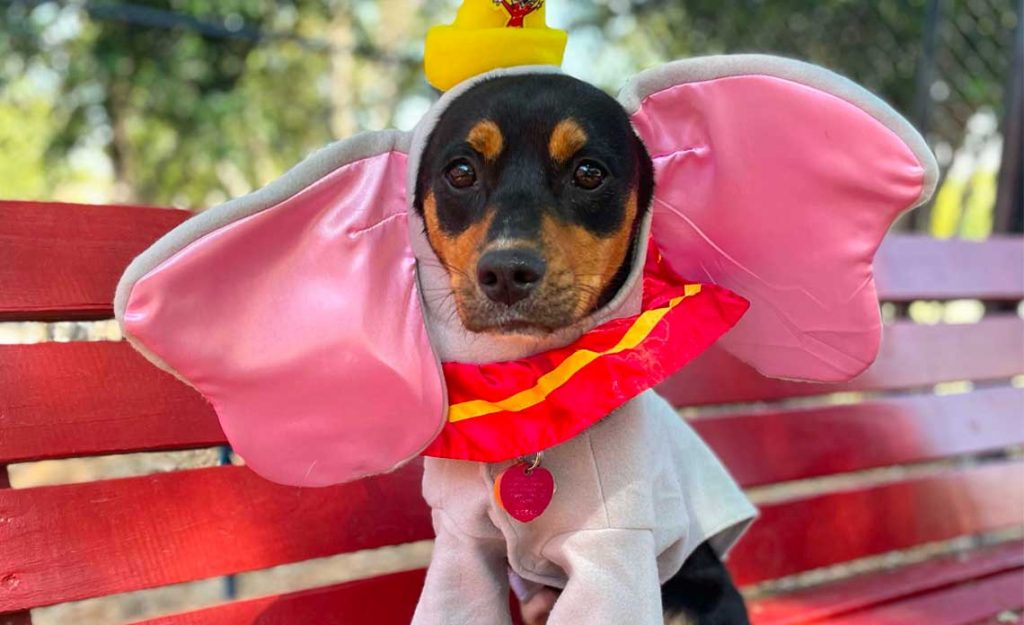 Operation Kindness Blog - Halloween Pet Costume Photo Gallery and Tips | North Texas No-Kill Animal Shelter