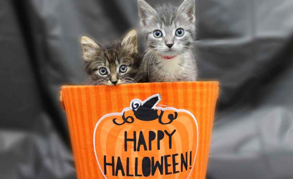 Operation Kindness Blog - Halloween Pet Safety Tips | North Texas No-Kill Animal Shelter