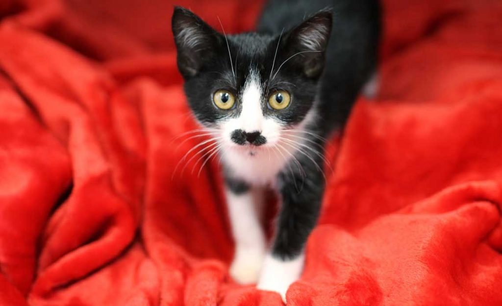 Operation Kindness Blog | Caring for foster kittens | Operation Kindness No-kill Animal Shelter