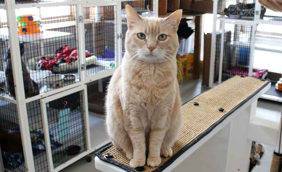 Operation Kindness Blog - June is Adopt a Shelter Cat Month | North Texas No-Kill Animal Shelter