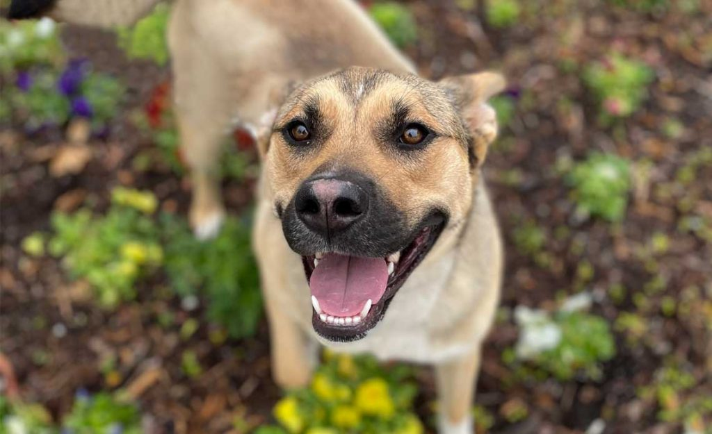 Operation Kindness Blog - Keep your pet cool in the summer heat | North Texas No-Kill Animal Shelter