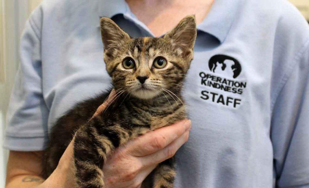 Operation Kindness Blog - Kitten rescued from inside car engine | North Texas No-Kill Animal Shelter