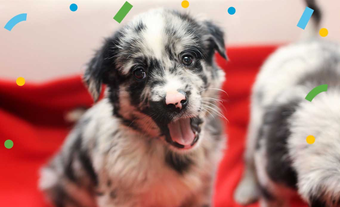 Operation Kindness Blog - North Texas Giving Day is September 23, 2021 | North Texas No-Kill Animal Shelter