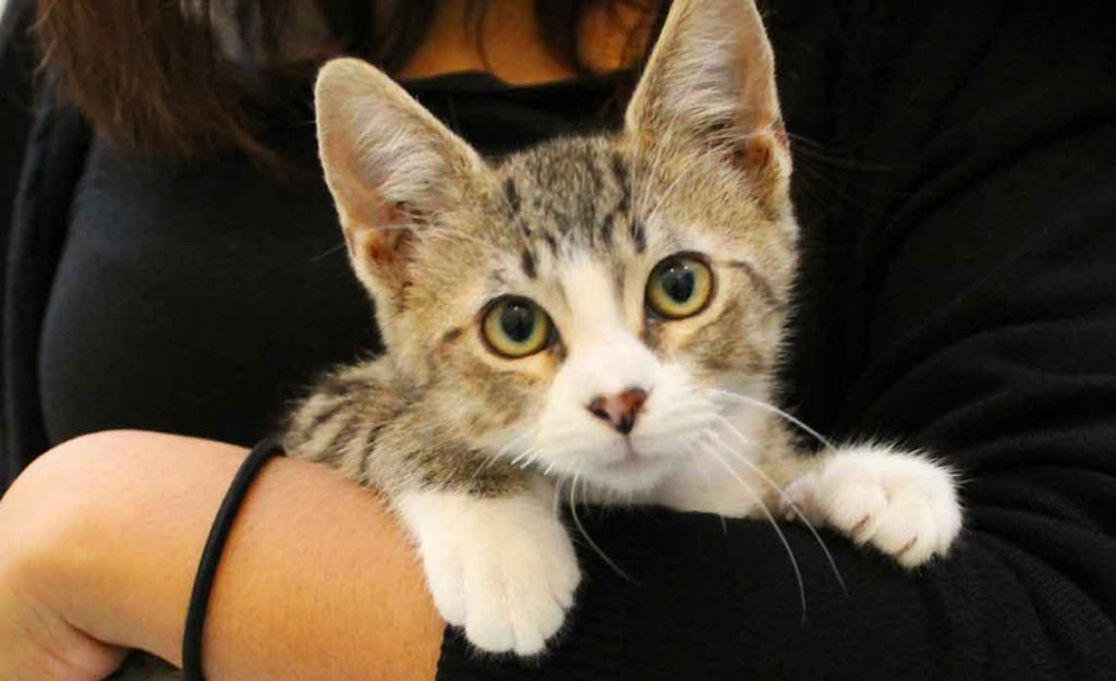 Operation Kindness Blog - Now offering tele-adoptions for pets | North Texas No-Kill Animal Shelter