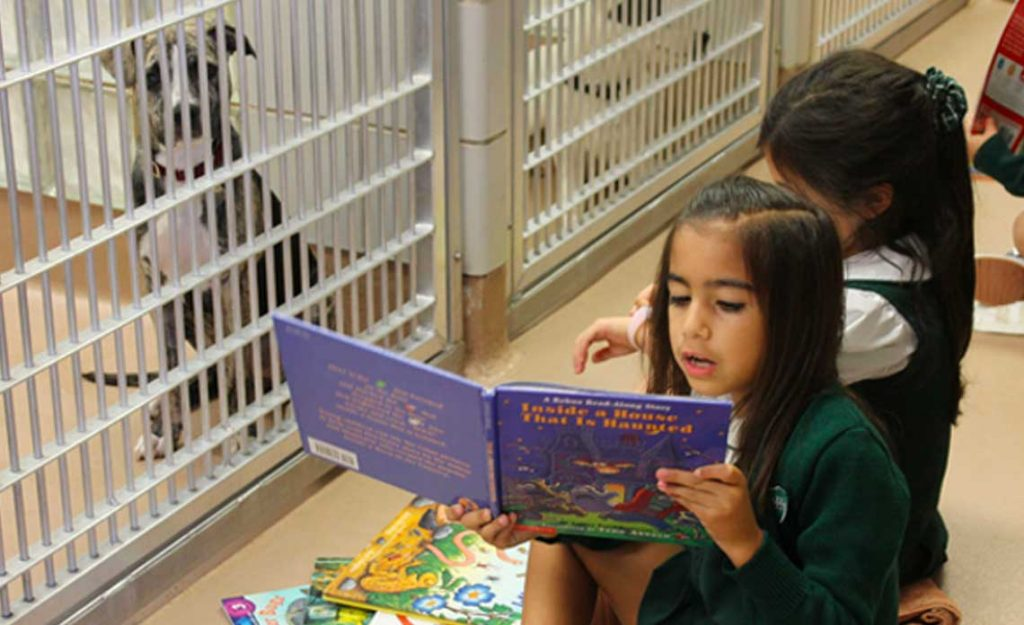 Children of North Texas participating in Operation Kindness' Stories for Pets at their adoption center | Operation Kindness Blog: Stories for Pets