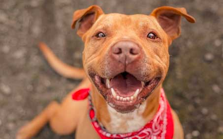 Operation Kindness Newsroom - The Pet Food Pantry at Operation Kindness Needs Our Help | North Texas No-Kill Animal Shelter