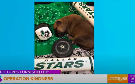 Operation Kindness Newsroom - Good Morning Texas: Operation Kindness Celebrates Dallas Stars by Naming Adorable Pups After Players | North Texas No-Kill Animal Shelter