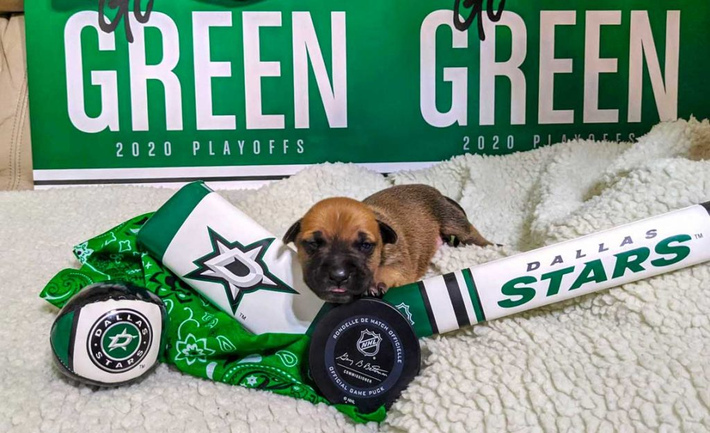 Operation Kindness Blog - Operation Kindness Celebrates Dallas Stars by Naming Adorable Pups After Players | North Texas No-Kill Animal Shelter