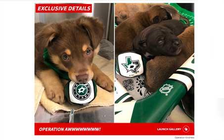 Operation Kindness Newsroom - TMZ: DALLAS STARS HONORED WITH PUPPIES FOR CUP RUN ... Meet Jamie, Benn & Kivi! | North Texas No-Kill Animal Shelter