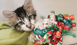 Operation Kindness' holiday gift wrapping benefiting homeless animal | No-Kill Animal Shelter and Animal Adoptions