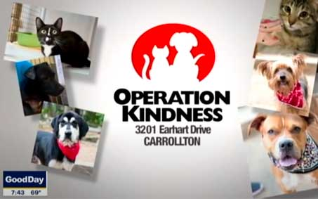 Operation Kindness Newsroom - Operation Kindness launches tele-adoptions | North Texas No-Kill Animal Shelter