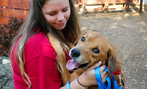 Happy adoptable dog at Operation Kindness, a no-kill animal shelter specializing in dog and cat adoptions
