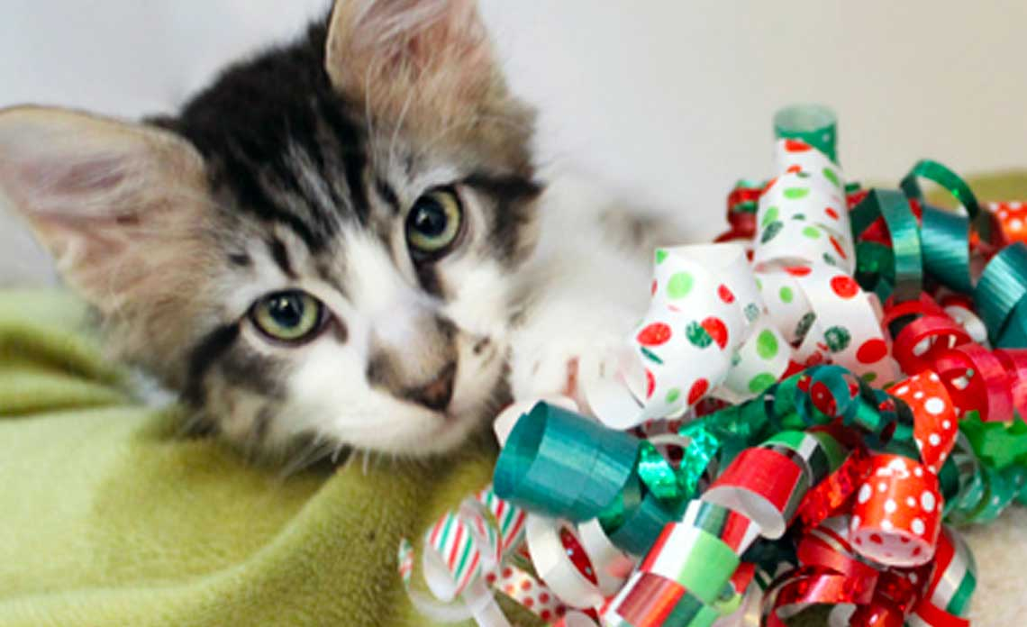 Holiday gift wrapping at Barnes and Noble featuring Ester Mooring and Operation Kindness | North Texas No-Kill Animal Shelter