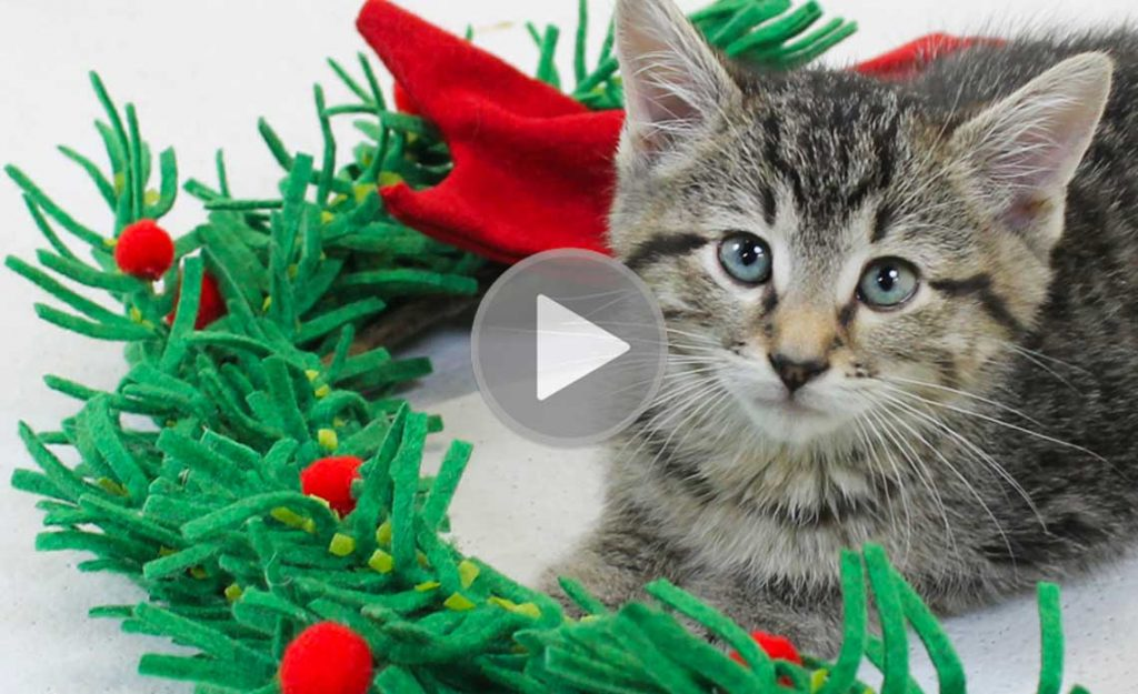 Adoptable kitten and Christmas wreath   Operation Kindness Blog: A Holiday Video for You