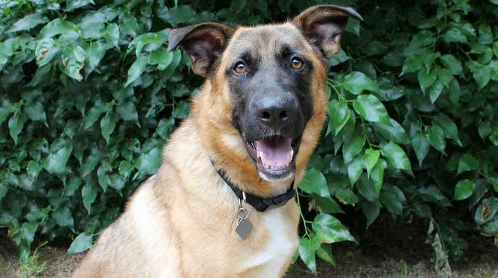 Lobo, an adoptable dog at Operation Kindness' No-Kill Animal Shelter in North Texas