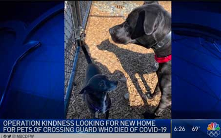 Newsroom | Bear & Petey, Beloved Plano Crossing Guard's Dogs, Are Up for Adoption | Operation Kindness North Texas No-Kill Animal Shelter