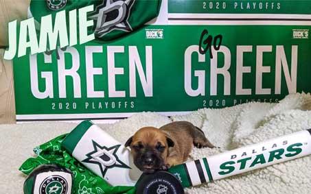Operation Kindness Newsroom - NHL.com: Texas animal shelter names new puppies for Stars, Benn, Kiviranta | North Texas No-Kill Animal Shelter
