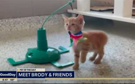 Newsroom | FOX 4 Foster Brody and his kitten friends | Operation Kindness North Texas No-Kill Animal Shelter