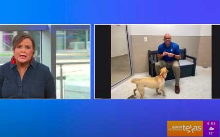 Newsroom | Good Morning Texas Adoptable Dogs | Operation Kindness North Texas No-Kill Animal Shelter
