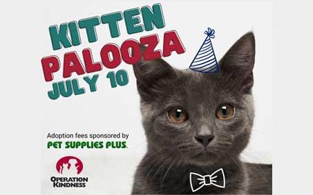 Newsroom | Kitten Palooza | Operation Kindness North Texas No-Kill Animal Shelter