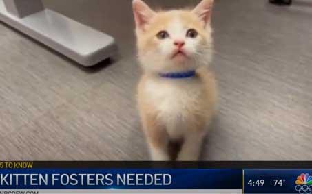 Newsroom | NBC 5 Kitten Fosters Needed | Operation Kindness North Texas No-Kill Animal Shelter