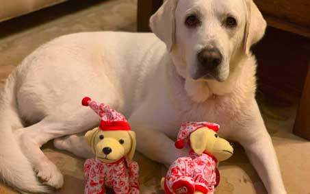 Newsroom | Raising Cane's Annual Plush Puppy Holiday Fundraiser Supports Operation Kindness and Animals in Need | Operation Kindness North Texas No-Kill Animal Shelter