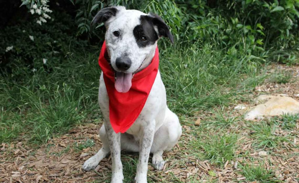 Operation Kindness Blog - Giving Tuesday is around the corner   North Texas No-Kill Animal Shelter