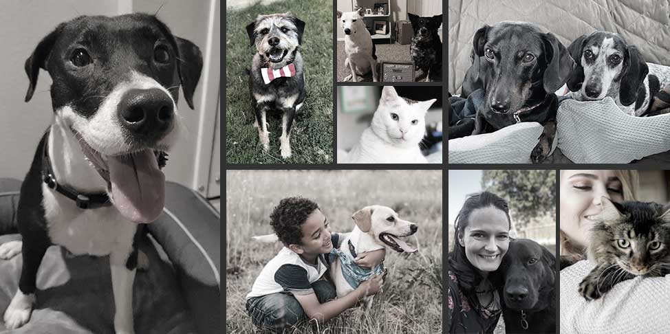 Collage of adopted pets and their forever families | Success stories of Operation Kindness No-Kill Animal Shelter in North Texas
