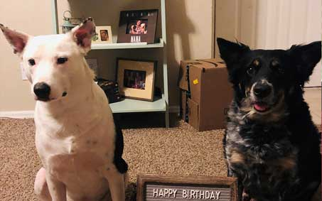 Plissken and Trudy, an Operation Kindness alumni | North Texas' Leading No-Kill Animal Shelter Success Stories