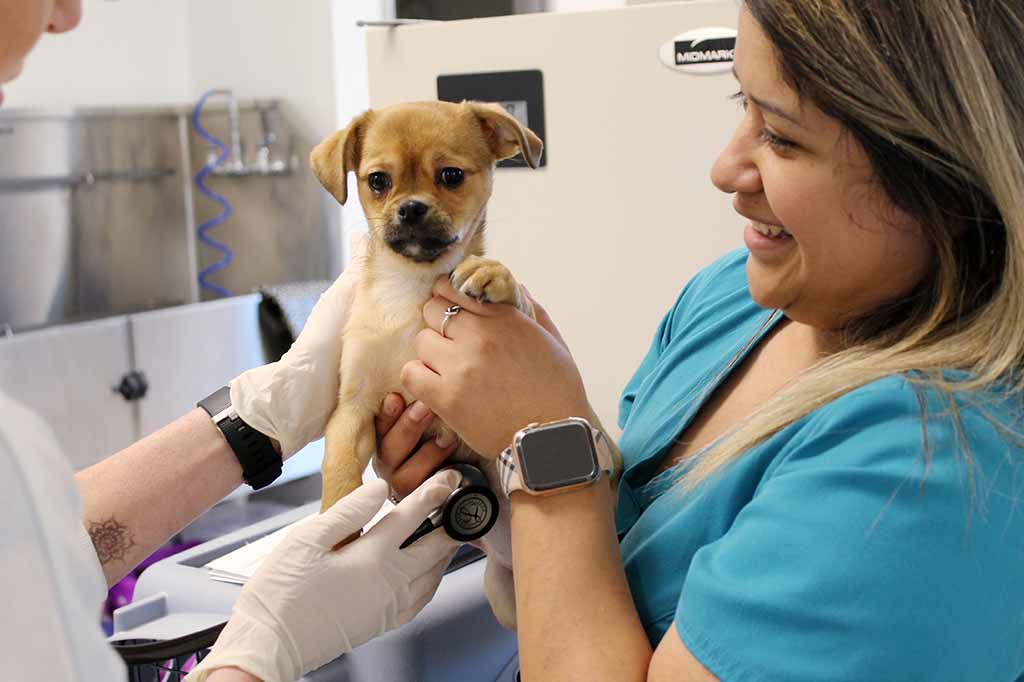 Adoptable puppy in the Medical wing of Operation Kindness' North Texas no-kill animal shelter and animal adoption center