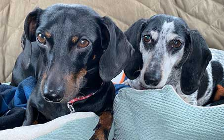 Roscoe and Oreo, an Operation Kindness alumni | North Texas' Leading No-Kill Animal Shelter Success Stories