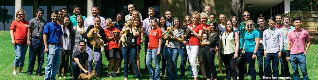 Texas Instruments staff during a corporate group volunteer session at Operation Kindness' North Texas no-kill animal shelter