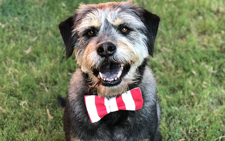 Wilson, an Operation Kindness alumni | North Texas' Leading No-Kill Animal Shelter